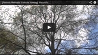 Video : 1 minute holiday : Clouds in Mary-le-bone Churchyard, London