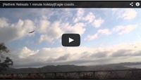 Video : 1 minute holiday : Eagle lazily rides thermals in Costa Rica