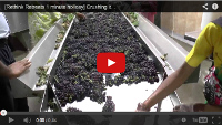 Video: 1 minute holiday: Crushing it at the Four Seasons Vineyard, Pune