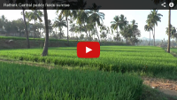 Video: 1 minute holiday: Sunrise in the paddy fields, Hampi Island